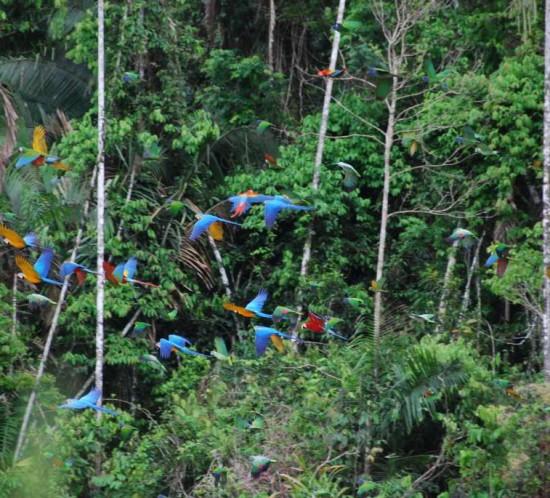 Papageien im Dschungel